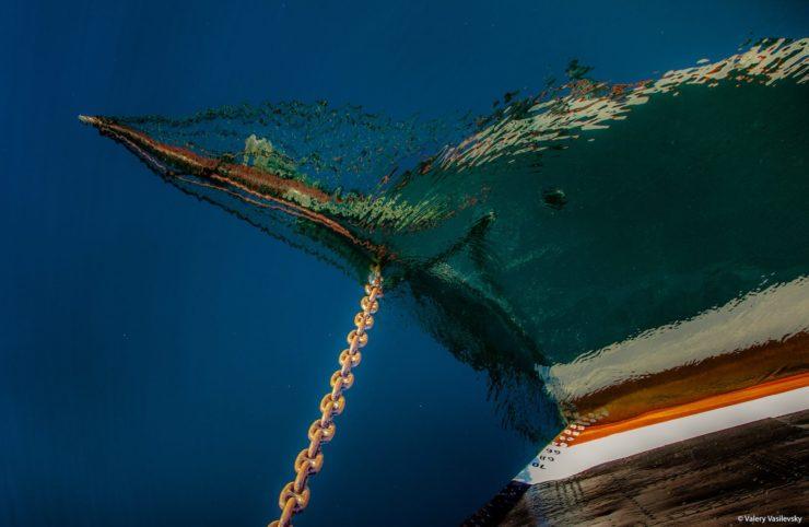 Dziobnica Sedova odbijająca się w wodzie